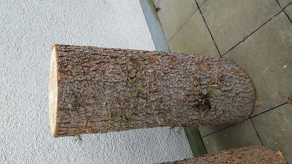 Baumstamm Fichte als Deko oder Brennholz zu verschenken in ...