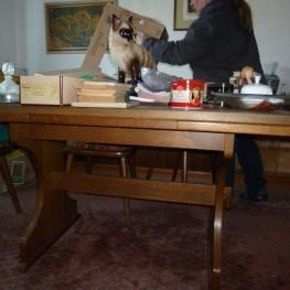 Esszimmertisch, Stühle , Eichenfurnier