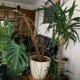 Zimmerpflanze zu verschenken